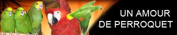 .:: Centre d élevage - Un amour de perroquet - Aras, Amazones, Cacatoès, Gris du Gabon, Pionus ::.